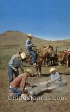 wes000462 - Branding Time Western Cowboy, Cowgirl Postcard Postcards