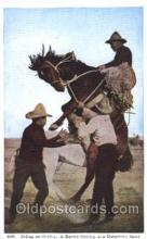 wes000465 - Riding an Outlaw Western Cowboy, Cowgirl Postcard Postcards