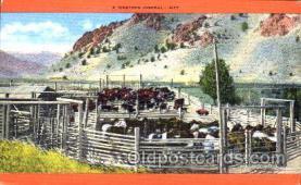 wes001271 - Western, Cowboy, Cowgirl, Postcard Postcards