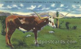 wes002203 - Texas Longhorn Western Cowboy, Cowgirl Postcard Postcards