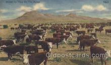wes002204 - Rounding Up Cattle Western Cowboy, Cowgirl Postcard Postcards