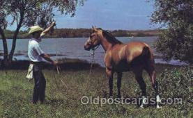 wes002226 - Texas Cowboy & his Horse Western Cowboy, Cowgirl Postcard Postcards