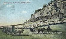 wes002235 - Sheep Going to Market Western Cowboy, Cowgirl Postcard Postcards