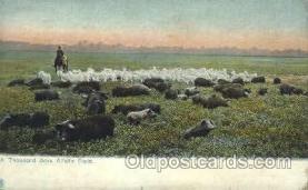 wes002243 - Alfalfa Field Western Cowboy, Cowgirl Postcard Postcards