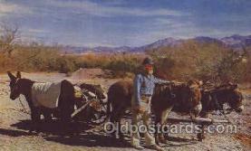 wes002262 - Western Cowboy, Cowgirl Postcard Postcards