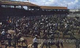 wes002263 - Nebraska Rodeo Western Cowboy, Cowgirl Postcard Postcards