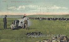 wes002293 - Branding Calves Western Cowboy, Cowgirl Postcard Postcards
