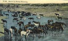 wes002326 - Horse Round Up Western Cowboy, Cowgirl Postcard Postcards