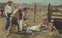 wes002349 - Branding Time Western Cowboy, Cowgirl Postcard Postcards