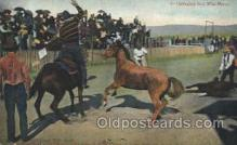 wes002363 - Bringing in a Wild Horse Western Cowboy, Cowgirl Postcard Postcards