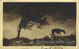 wes002379 - Western Cowboy, Cowgirl Postcard Postcards