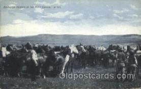 wes002599 - Western Cowboy, Cowgirl Postcard Postcards