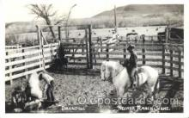 wes002603 - Branding, Nevada Ranch Scene Western Cowboy, Cowgirl Postcard Postcards