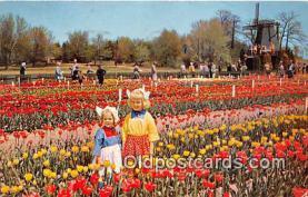 Nelis Tulip Farm