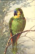 xrt035116 - Artist Signed Catherine Klein Postcard Postcards