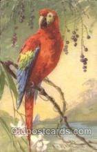 xrt035143 - Artist Signed Catherine Klein Postcard Postcards