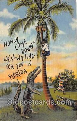 yan000005 - Florida, USA  Postcard Post Card