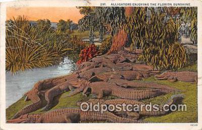 yan000007 - Florida, USA  Postcard Post Card