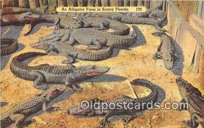 yan000013 - Florida, USA Alligator Farm Postcard Post Card