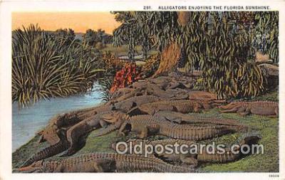 yan000015 - Florida, USA  Postcard Post Card