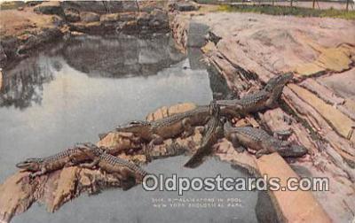 yan000017 - New York Zoological Park, USA Alligators in Pool Postcard Post Card