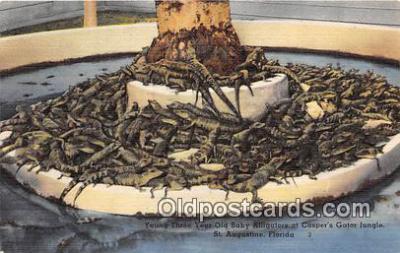 yan000019 - St Augustine, FL, USA Baby Alligators, Casper's Gator Jungle Postcard Post Card