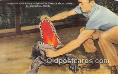 yan000021 - St Augustine, FL, USA Casper's Alligator Jungle Postcard Post Card