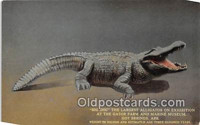 yan000032 - Hot Springs, Ark, USA Big Doc, Gator Farm & Marine Museum Postcard Post Card
