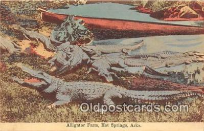 yan000034 - Hot Springs, Ark, USA Alligator Farm Postcard Post Card