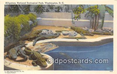 yan000035 - Washington DC, USA Alligators National Zoological Park Postcard Post Card