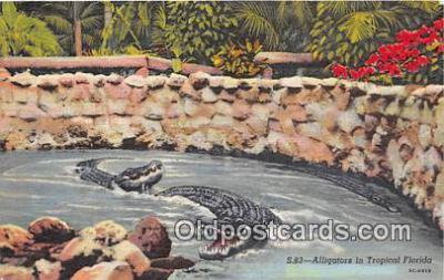 yan000037 - Florida, USA  Postcard Post Card
