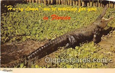 yan000039 - Florida, USA  Postcard Post Card