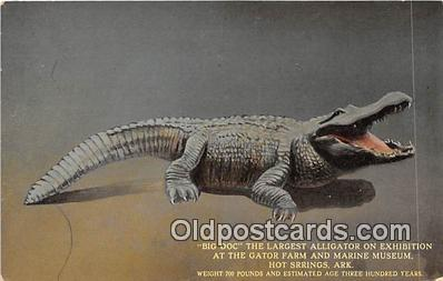 yan000042 - Hot Springs, Ark, USA Big Doc, Gator Farm & Marine Museum Postcard Post Card