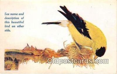 yan010006 - Des Moines, Iowa, USA American Goldfinch Postcard Post Card