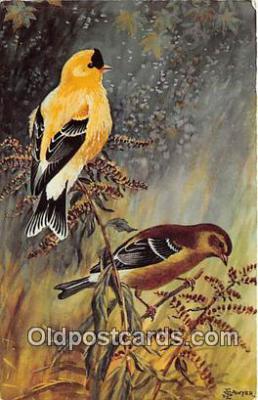 yan010016 - Washington State Bird, USA Willow Goldfinch Postcard Post Card