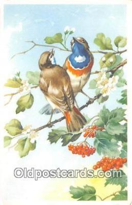 yan010019 - Postcard Post Card