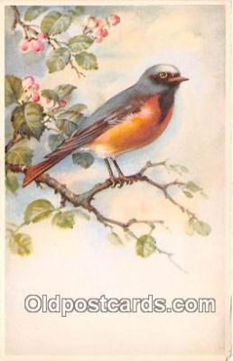 yan010022 - Postcard Post Card