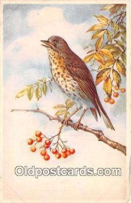 yan010025 - Postcard Post Card