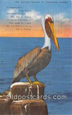 yan010052 - St Petersburg, FL, USA Old Bill Pelican Postcard Post Card