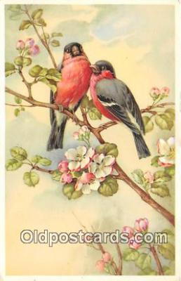 yan010056 - Postcard Post Card