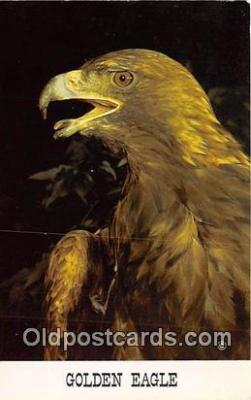 yan010065 - Golden Eagle Postcard Post Card