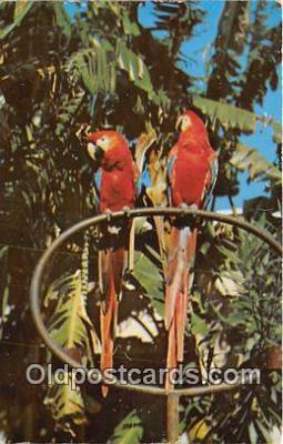 yan010066 - Mexico, Central America Guacamaya Postcard Post Card