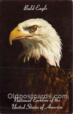 yan010068 - USA Bald Eagle Postcard Post Card