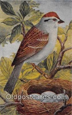 yan010074 - Chipping Sparrow Postcard Post Card
