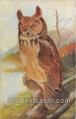 yan010078 - Harvey Great Horned Owl Postcard Post Card