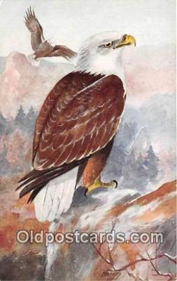 yan010079 - Harvey Bald Eagle Postcard Post Card