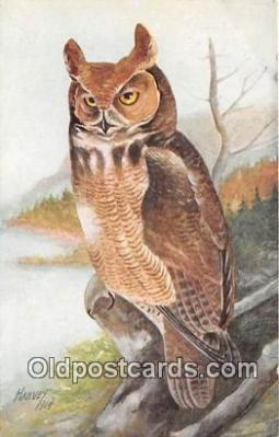 yan010080 - Harvey Great Horned Owl Postcard Post Card