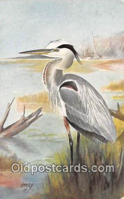 yan010090 - Harvey Great Blue Heron Postcard Post Card