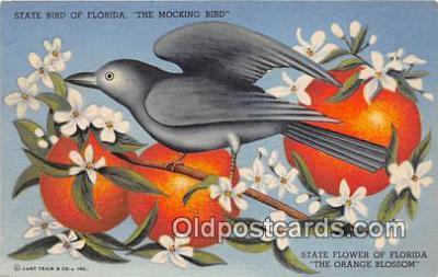 yan010109 - Florida, USA Mocking Bird Postcard Post Card