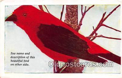 yan010114 - Canada Scarlet Tanager Postcard Post Card